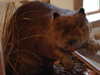 Museum_beaver