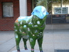 berkshire_sheep_2