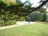 Sunnyside4